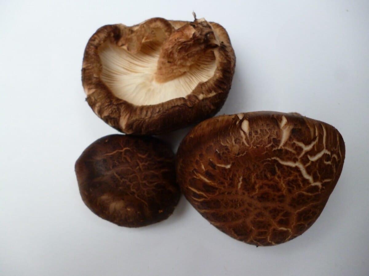 Shiitake mushrooms grown on oak log from the woods